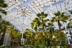 botanical-garden-palm-trees