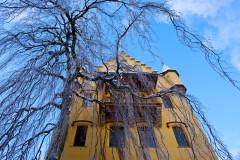 germany-spooky-tree