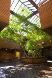 lobby-live-tree-skylight